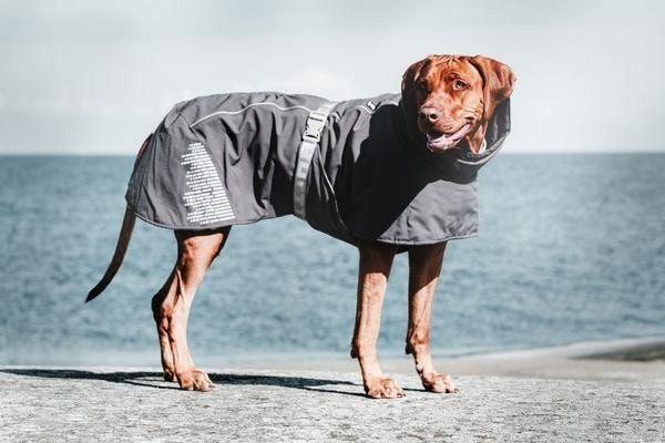 Bunda pro psa Hurtta Extreme Warmer - šedá 30