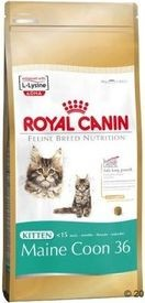 RC cat KITTEN MAIN COON 10kg