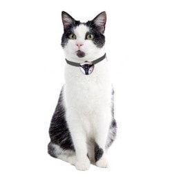 Kamera pro kočky Eyenimal Cat Cam