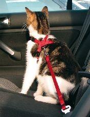 Trixie cat BEZPEČ.POSTROJ do auta KOČKA